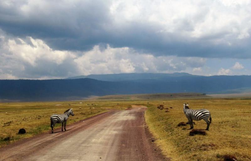 Due zebre nel ngorongoro in Tanzania