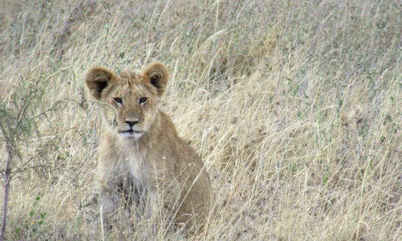 Traveltips per un safari nel Serengeti in Tanzania