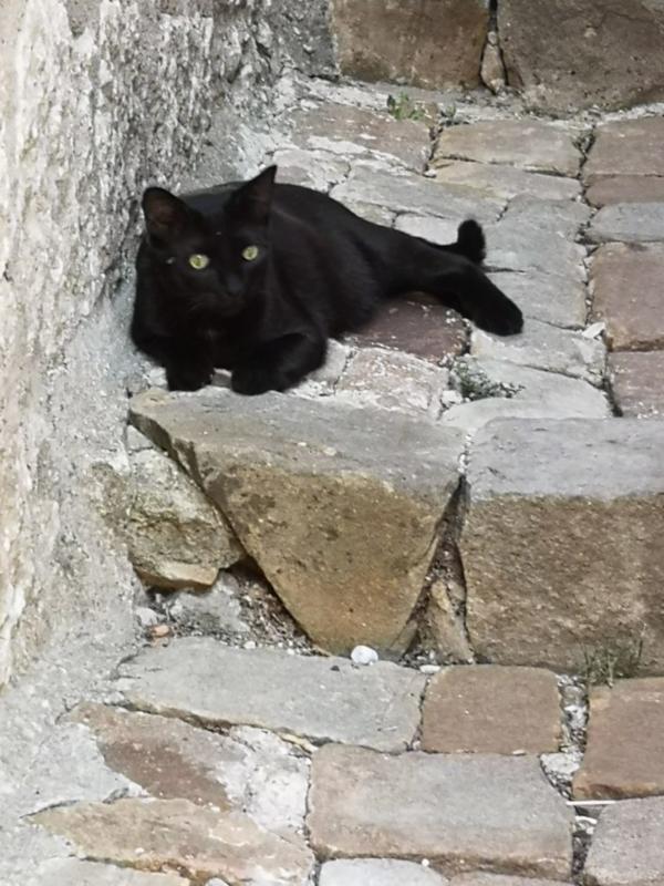 Un gatto in una piccola stradina di Petralia