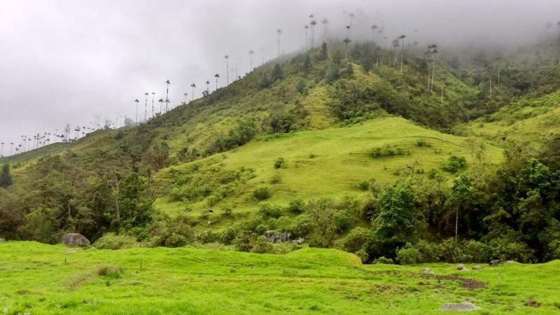 Le palme da cera della Valle di Cocora