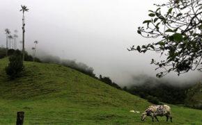 "Traveltips: consigli""Trekking Valle del Cocora"