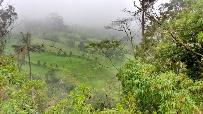 Traveltips per un Trekking nella Valle Cocora