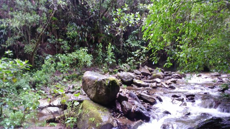 Bosco Nebuloso della Valle di cocora