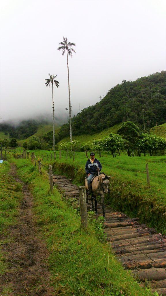 Il trekking nella Valle di Cocora a cavallo o a piedi