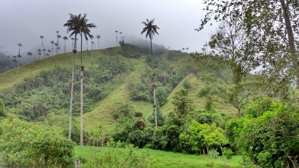 Consigli per il trekking nella valle del cocora in colombia