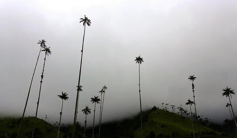 Valle di cocora con le palme da cera