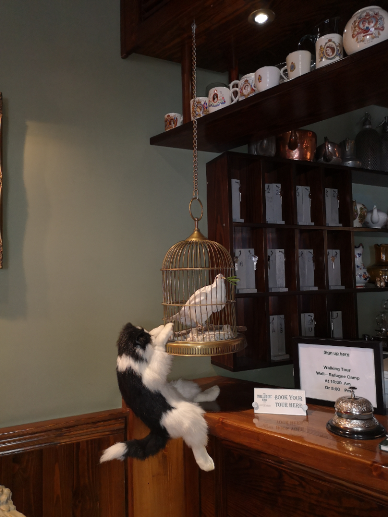 Un gatto che cerca di catturare la colomba della pace già in gabbia