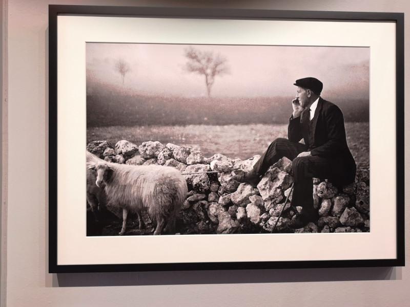 foto di un pastore alla mostra di Scianna nella sezione memoria