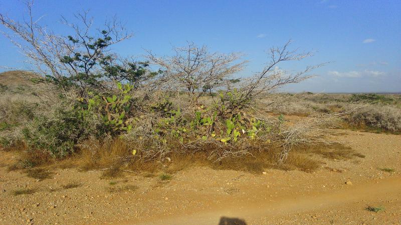 Deserto Guajira