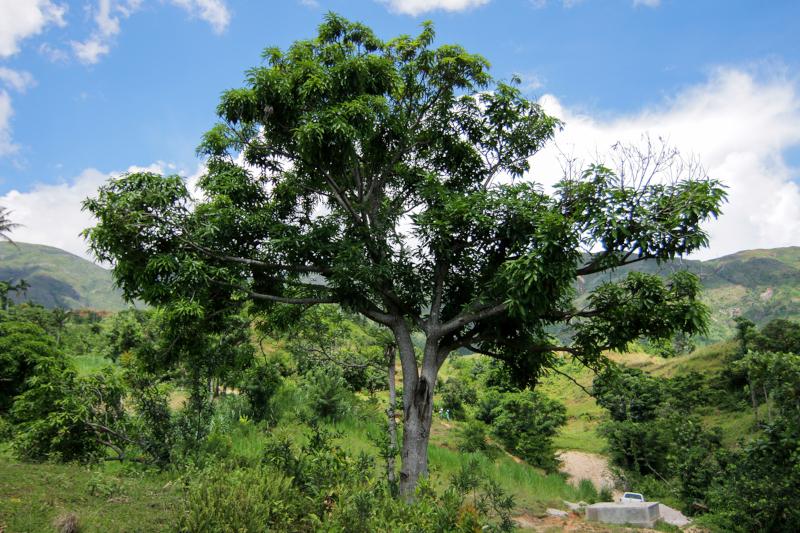 Assorbire CO2 Tutti gli alberi assorbono CO2 dallatmosfera