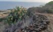 Trekking a Ustica: Sentiero del Mezzogiorno
