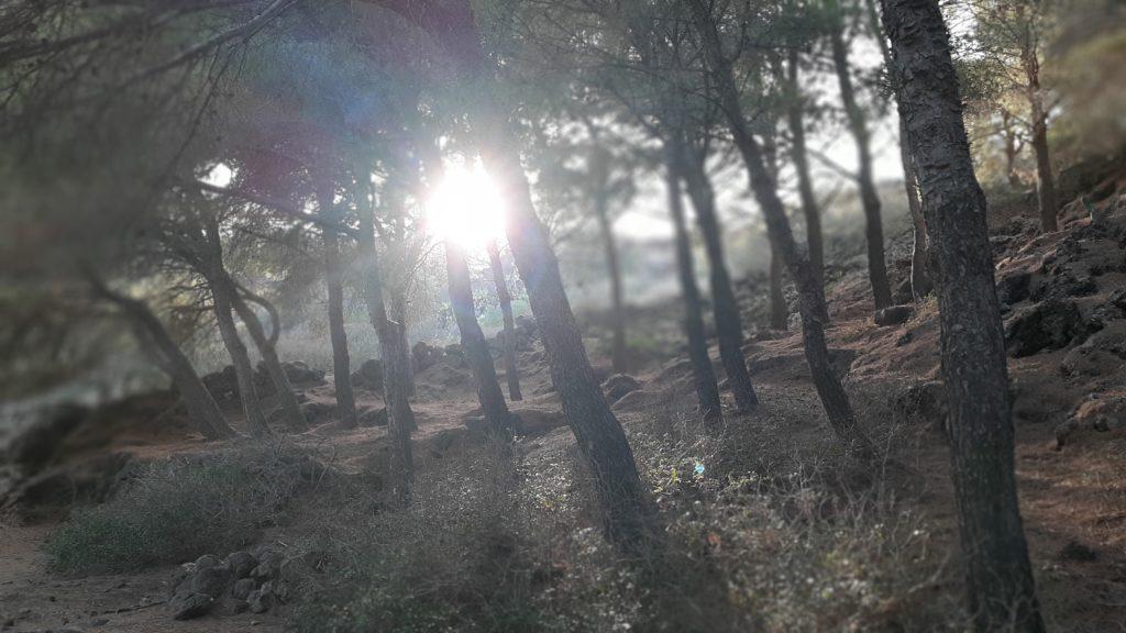 Sentiero del Bosco di Ustica