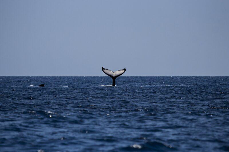 Giornata M ondiale delle balene 16 febbraio 2021