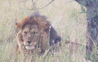 """Mi manca viaggiare ma sono consapevole che in questo momento è doveroso rimanere a casa ed essere responsabili per permetterci di ritornare ad esplorare il mondo. Mi rimane fantasticare, immaginare, sognare... ieri ho deciso di stampare alcune fotografie di viaggio tra cui quelle del Kenia. Un meraviglioso album di memorie dei miei safari, tutto da sfogliare. Bellissimo!  Voi preferite le foto stampate  o quelle """"on line""""? #travelinspiration #viaggiare #africa #safari #maldafrica #travelphotography #leon #travelblogger #beautifuldestinations ##naturelovers #passionpassport #cometosee"""
