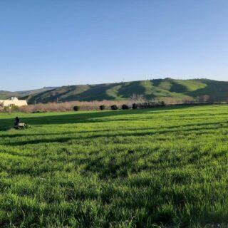 Non siamo in Toscana, inUmbria e nemmeno in Abruzzo ma siamo in una terra baciata quasi tutto l'anno dal sole . Siamo in Sicilia, una terra che in primavera si risveglia e si illumina di verde brillante. Vi aspettavate una Sicilia così? La #sicilia oltre il mare ha tante altre bellezze da offrire. Seguite il mio profilo e scoprirete una Sicilia diversa da vivere attraverso esperienze insolite. Un assaggio... nella mia bio il link ad un un'esperienza straordinaria vissuta a Stromboli. #traveldame #siciliamondo #travelphotography #inviaggioconlablogger #visitsicily #siciliavera #campagnasiciliana #siciliautentica #slowtravelling #ontheroad #positivevibes💫